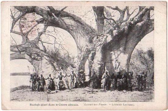 baobabbar0
